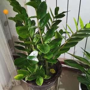 """我新添加了一棵""""金钱树""""到我的""""花园"""""""