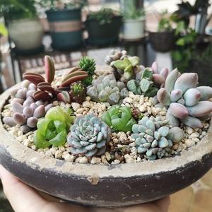 A 花间集