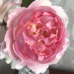 新苗从孕育花蕾到打开 二十天