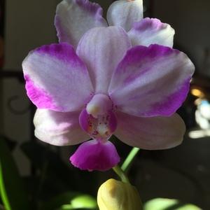 今天发现紫水晶居然有香味,是一种清香的味道!