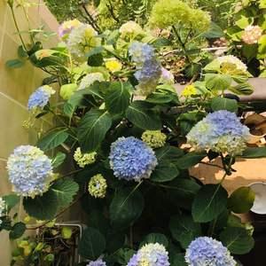 一盆花有N众颜色,真想满屋子的无尽夏。