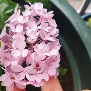 小粉红和小蓝紫也好看 哈哈