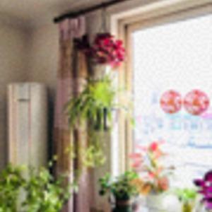 今天终于把前阵子买的吊挂花架用上了~一盆菜叶草增添色彩,一盆金边吊兰垂吊性好~目前还比较满意~ 客厅窗前的大盆菜叶草僵苗烂根了,拔掉了,新进的草莓们入镜!