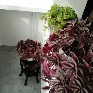A室内花卉