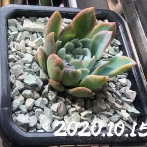 """我新添加了一棵""""紫罗兰女王""""到我的""""花园"""""""