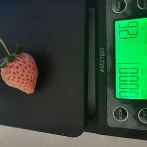 淡雪,等到籽全红了再等两天会比较好吃,酸味会少,但是就,草莓的味道