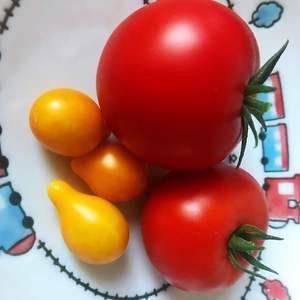 凑不够一盘,倒希望他们能一起成熟,做个西红柿炒蛋,哈哈