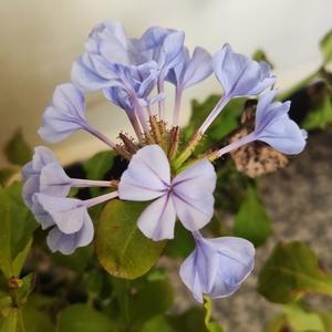 冬日还在开的花花