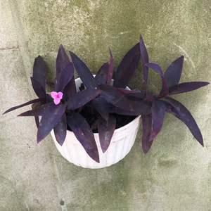 """我新添加了一棵""""紫罗兰""""到我的""""花园"""""""