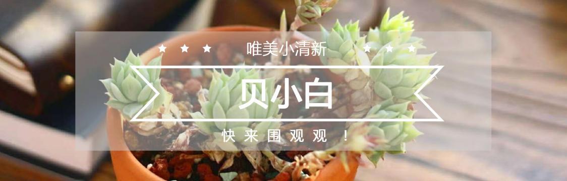 中文个人主页