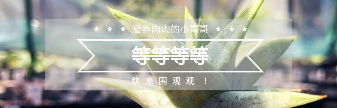 个人主页 中文
