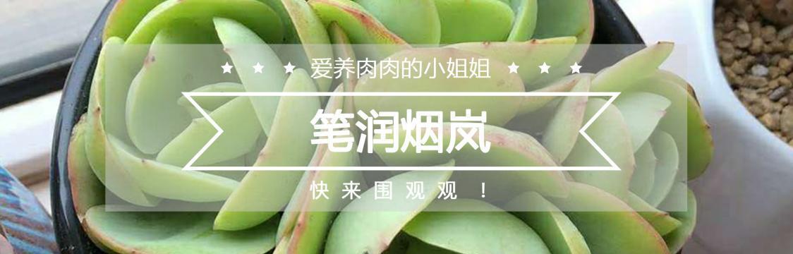 用户推荐中文