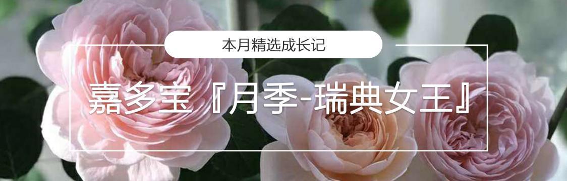 中文花主页