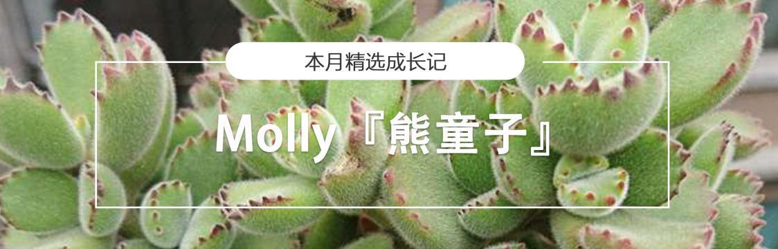 成长记中文