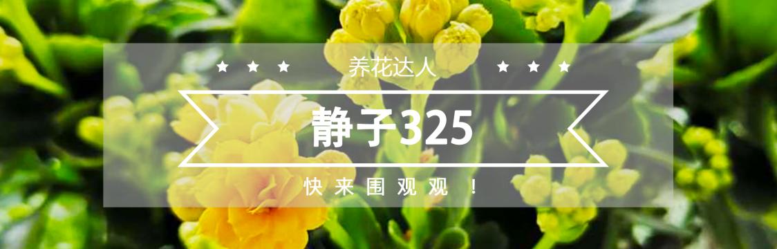 个人主页中文